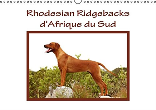 Rhodesian Ridgebacks D'afrique du Sud: Rhodesian Ridgebacks Photographies par Anke Van Wyk ...