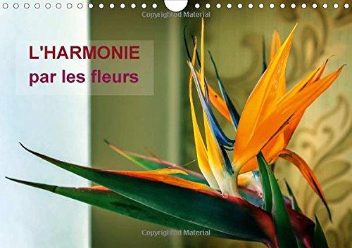 L'Harmonie Par les Fleurs: Arretons-Nous un Instant Pour Admirer la Beaute Fragile et ...