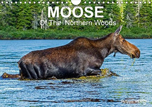 9781325056477: Moose of the Northern Woods: Let's Follow the Moose of Quebec Northern Woods. Philippe Henry Presents 13 Photos of This Silent Giant.
