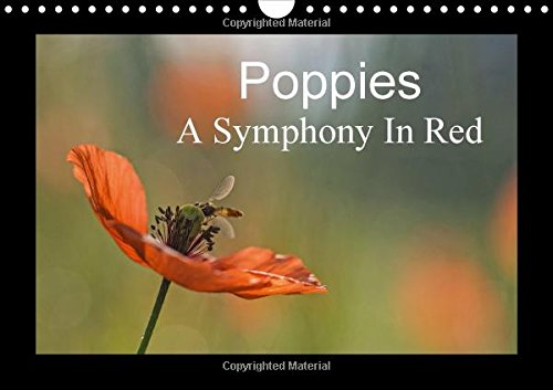 9781325057269: Poppies A Symphony In Red 2016: It is almost too beautiful. The red poppies in a wheat field swaying gently in the wind, the buzz of insects and ... you throughout the year. (Calvendo Nature)