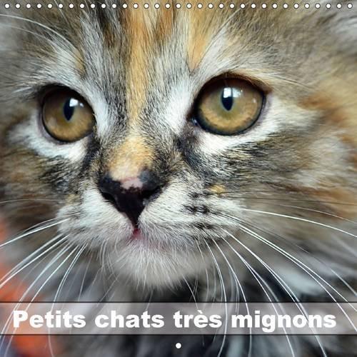 Petits Chats Tres Mignons: Photos Fascinantes des Tigres de Salon Prises en Gros Plan (Calvendo ...