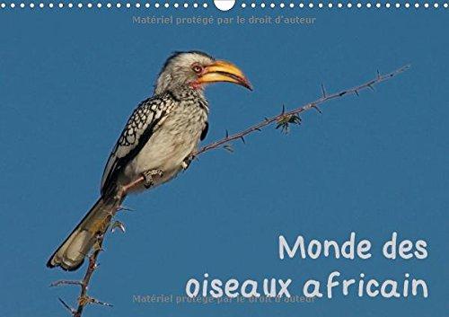 Monde des Oiseaux Africain 2016: Des Portraits d'Oiseau Fascinant de l'Afrique du Sud (...