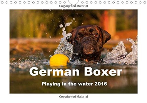 9781325069620: German Boxer / UK-Version 2016: Playing in the water 2015 (Calvendo Animals)