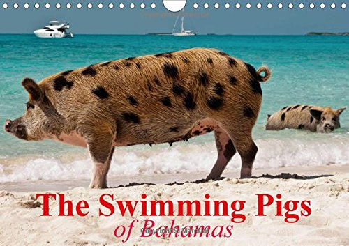 9781325071043: The Swimming Pigs of Bahamas: The Happy Pigs of the Big Majors Cay (Calvendo Animals)