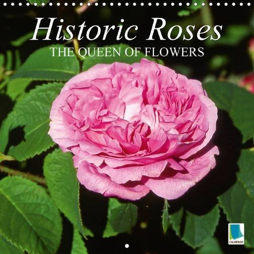 9781325073047: Historic Roses - The Queen of Flowers: Captivating Beauty, Enchanting Fragrance: Historic Roses (Calvendo Nature)