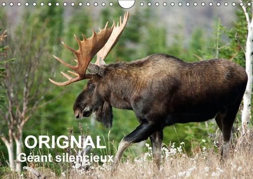 Orignal. Geant Silencieux: L'Orignal du Canada au Fil des Quatre Saisons (Calvendo Nature) (...