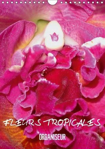 Fleurs Tropicales / Organiseur: La Splendeur des Fleurs Tropicales Magnifiques dans Leur ...