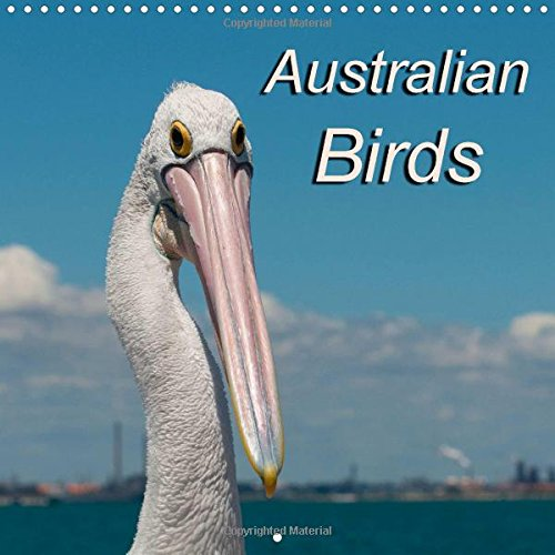 9781325074983: Australian Birds 2016: Birds of Australia (Calvendo Animals)