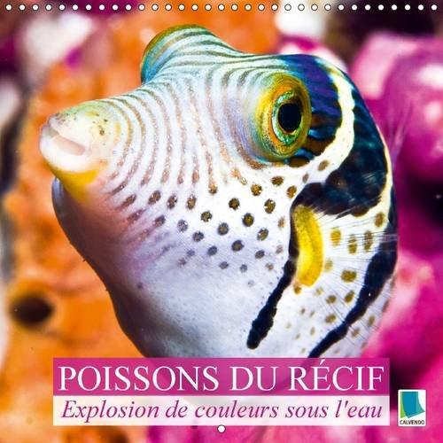 9781325076741: Explosion de Couleurs Sous la Mer : Poissons du Recif: Poissons et Coraux (Calvendo Animaux) (French Edition)