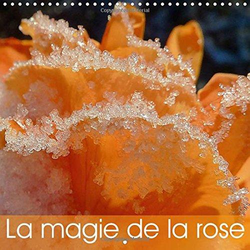 La Magie de la Rose: De Magnifiques Roses Lumineuses, de Varietes et de Couleurs Differentes (...