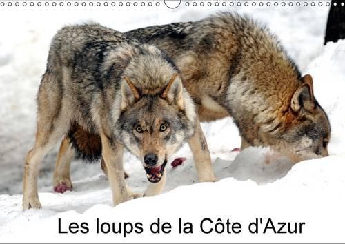 Les Loups de la Cote D'azur: Un Parc a Loups a Ete Cree dans le Mercantour et a Accueilli Ses ...