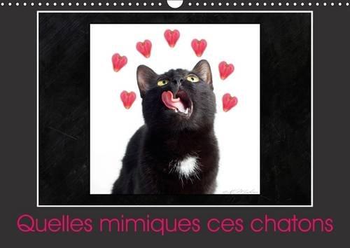 Quelles Mimiques Ces Chatons: Un Calendrier Plein D'humour (Calvendo Animaux) (French Edition)...