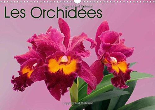 Les Orchidees: Les Orchidees Exotiques (Calvendo Nature) (French Edition): MonarchC