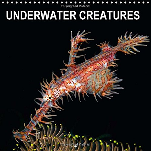 9781325086344: UNDERWATER CREATURES (Wall Calendar 2016 300 × 300 mm Square): Monthly calendar with amazing underwater photographs. (Monthly calendar, 14 pages) (Calvendo Animals)