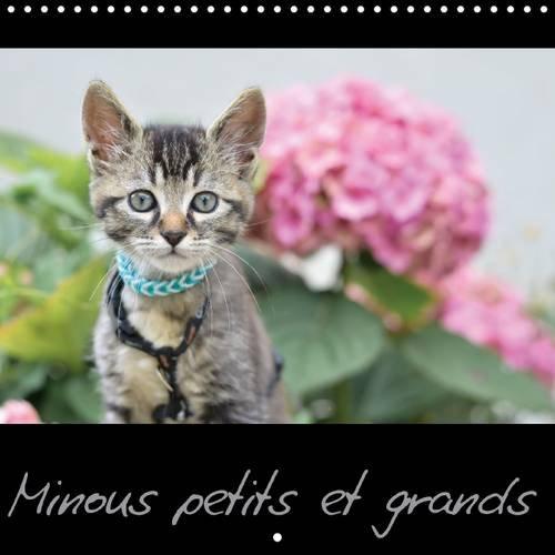 Minous Petits et Grands: Calendrier sur les Chats (Calvendo Animaux) (French Edition): Nadine ...