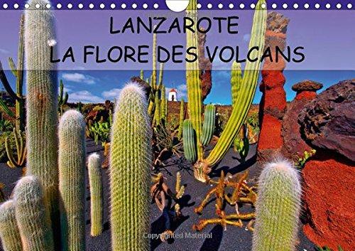 Lanzarote la Flore des Volcans 2016: Lanzarote des Champs de Lave Naturellement Fertiles (Calvendo ...