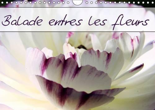 Balade Entre les Fleurs: Photos de Fleurs des Champs et de Jardins (Calvendo Nature) (French ...