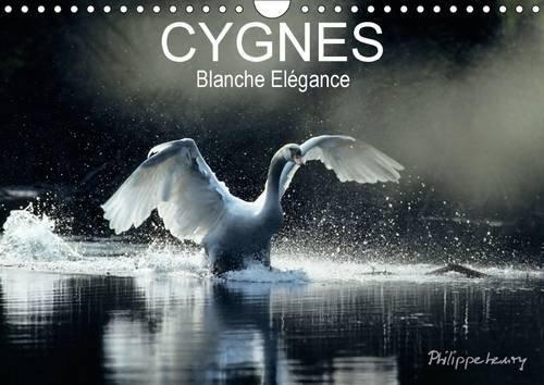 Cygnes. Blanche Elegance: Les Plus Belles Photos de Cygnes Prises dans des Regions Sauvages de ...