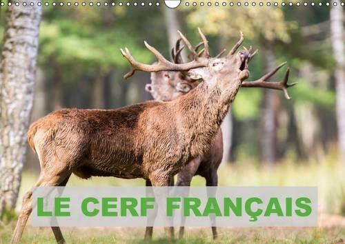 Le Cerf Francais: Photos de Cerfs en France (Calvendo Animaux) (French Edition): Bernasconi Edouard