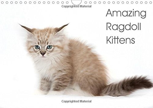 9781325099931: Amazing Ragdoll Kittens 2016: beautyfull little ragdoll Kittens (Calvendo Animals)