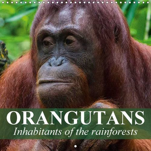 9781325104031: Orangutans Inhabitants of the Rainforests: Intelligent Creatures Who Clearly Have the Ability to Reason and Think (Calvendo Animals)