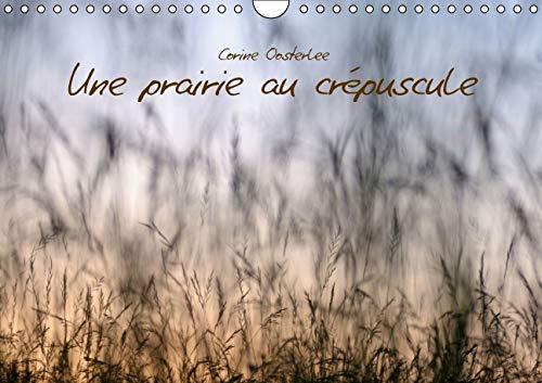 Une Prairie au Crepuscule 2016: Beaute des Graminees (Calvendo Nature) (French Edition): Corine ...