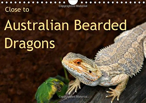 9781325108541: Close to Australian Bearded Dragons 2016: Fantastic close-up photography of beautiful Australian Bearded Dragons. The big lizards with personalities. (Calvendo Animals)