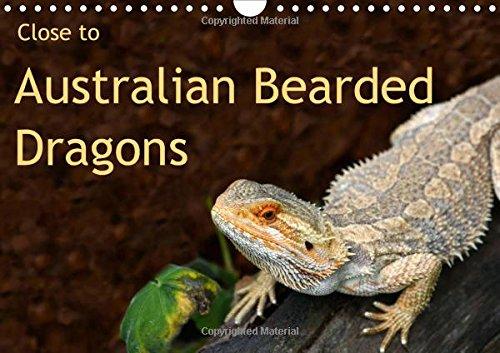 9781325108541: Close to Australian Bearded Dragons (Wall Calendar 2016 DIN A4 Landscape): Fantastic close-up photography of beautiful Australian Bearded Dragons. The ... calendar, 14 pages) (Calvendo Animals)