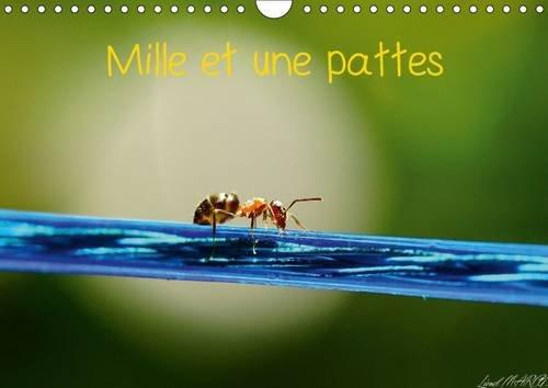 Mille et une Pattes 2016: Photographie d'Insectes (Calvendo Animaux) (French Edition): Lionel ...