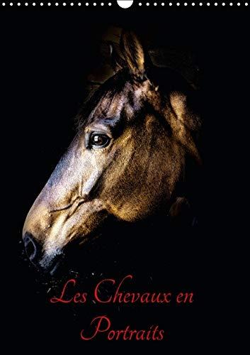 Chevaux en Portraits 2016: Portraits de Chevaux en Liberte et Studio (Calvendo Animaux) (French ...