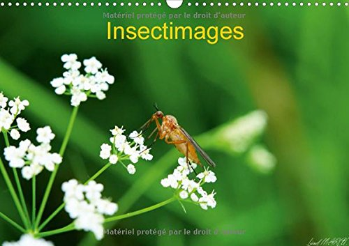Insectimages 2016: Photographies d'Insectes (Calvendo Animaux) (French Edition): Lionel Marcu