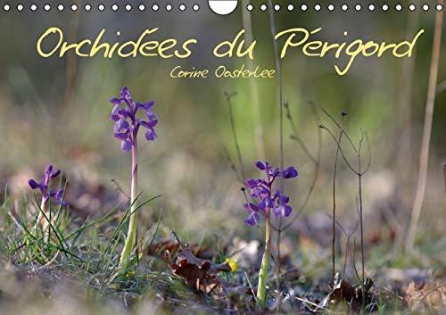 9781325110490: Orchidees du Perigord 2016: Belles et Fragiles Fleurs Sauvages