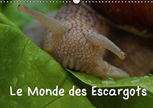 Le Monde des Escargots 2016: Escargots dans Notre Paysage (Calvendo Nature) (French Edition): Elken...