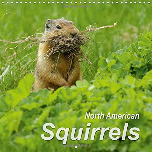9781325112555: North American Squirrels 2016: Lively squirrels in the steppes, tundra and mountains of North America (Calvendo Animals)
