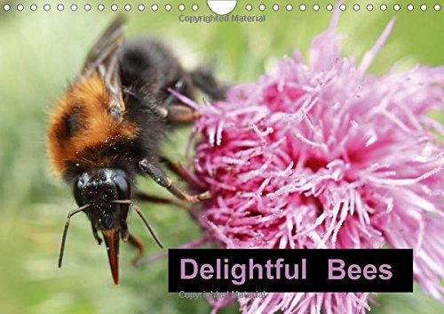 9781325114580: Delightful Bees (Wall Calendar 2016 DIN A4 Landscape): One of natures important little helpers (Monthly calendar, 14 pages) (Calvendo Animals)
