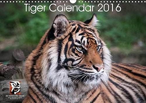 9781325116621: Tiger Calendar 2016: Tiger Calendar with 13 Tiger Images (Calvendo Animals)