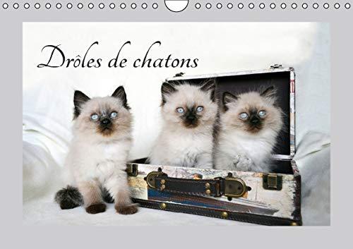 Droles de Chatons 2016: Ils Vous Donneront le Sourire (Calvendo Animaux) (French Edition): Jennifer...