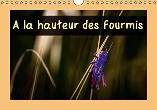La Hauteur des Fourmis 2016: Calendrier Mensuel, 14 Pages avec des Macrophotographies d'...