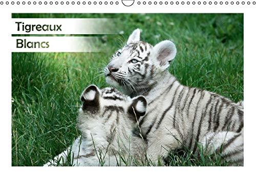 Tigreaux Blancs 2016: Portraits Animaliers de Tigreaux Blancs a la Decouverte de Leur Environnement...