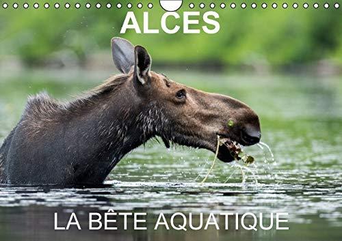 Alces - La Bete Aquatique 2016: 13 Photos d'Orignaux dans Leur Milieu Aquatique, au Quebec (...