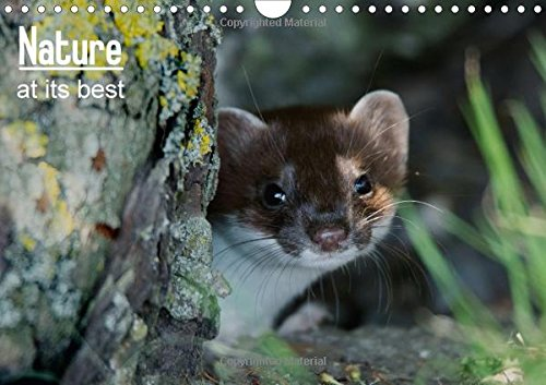 9781325120451: Nature at its best 2016: Images of wildlife from the British Isles in natural habitat (Calvendo Animals)