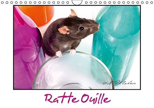 Ratte Ouille 2016: Gentille Muridee (Calvendo Animaux) (French Edition): Kathy Mahevo