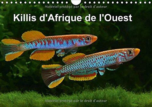 9781325121298: Killis d'Afrique de l'Ouest 2016: Poissons colores (Calvendo Animaux) (French Edition)