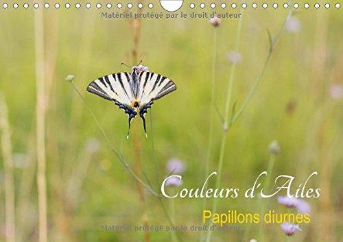 Couleurs D'ailes 2016: Papillons Diurnes (Calvendo Animaux) (French Edition): Djamal Makhloufi