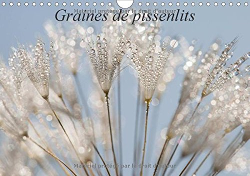 Graines de Pissenlits 2016: Photos Macro de Graines de Pissenlits (Calvendo Nature) (French Edition...