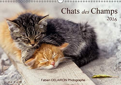 Chats des Champs 2016: 12 Images de Chats de Campagne (Calvendo Animaux) (French Edition): Fabien ...