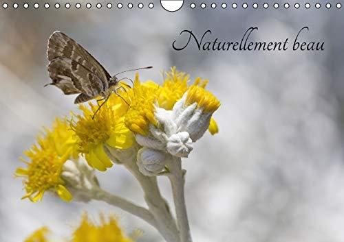 Naturellement Beau 2016: Un /Il Attentif sur la Nature Peut Devoiler de Vraies Merveilles (...
