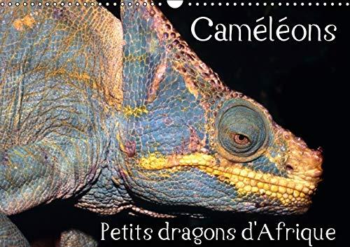 Cameleons - Petits Dragons d'Afrique 2016: Douze Portraits Extraordinaires des Plus ...