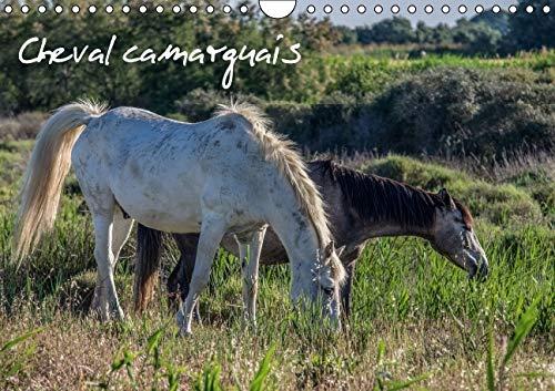 Cheval Camarguais 2016: La Beaute du Cheval Semi-Sauvage (Calvendo Animaux) (French Edition): ...