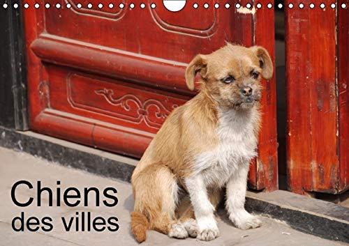 Chiens des Villes 2016: La Vie Canine en Ville (Calvendo Animaux) (French Edition): Jean-Luc ...